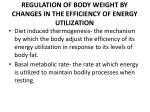 regulation of body weight by changes in the efficiency of energy utilization