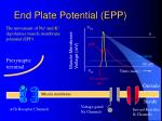end plate potential epp