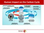 human impact on the carbon cycle