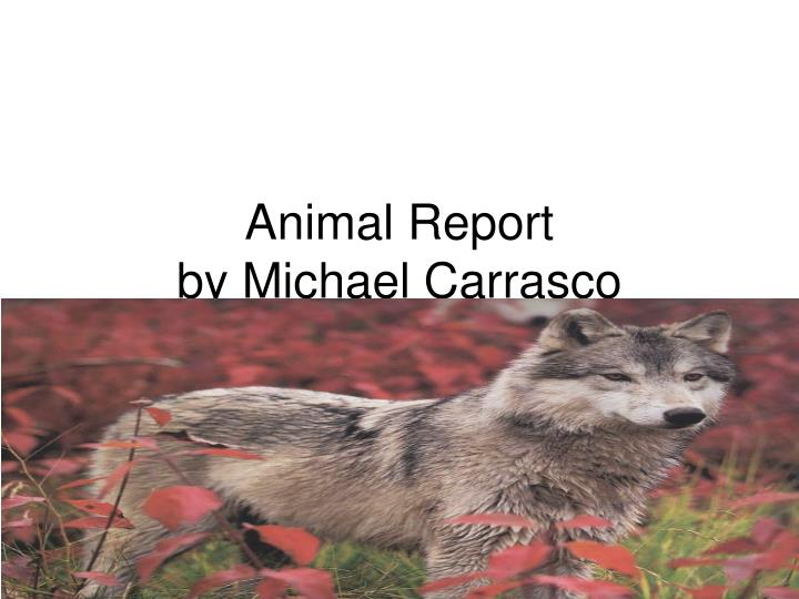 animal report by michael carrasco n.
