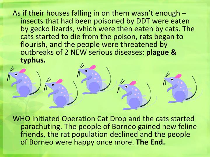 As if their houses falling in on them wasn't enough – insects that had been poisoned by DDT were eaten by gecko lizards, which were then eaten by cats. The cats started to die from the poison, rats began to flourish, and the people were threatened by outbreaks of 2 NEW serious diseases: