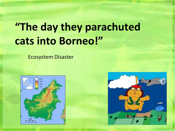 """""""The day they parachuted cats into Borneo!"""""""