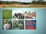 fotos matchia