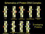 schematics of protein dna complex
