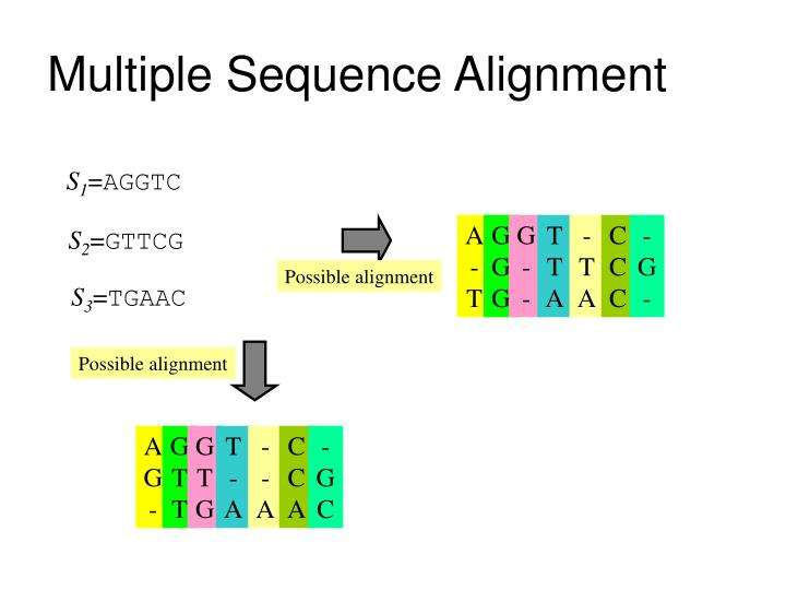 multiple sequence alignment n.