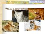 the cat is nature s beauty french proverb