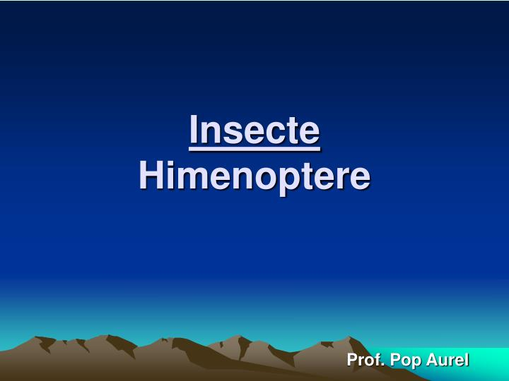 insecte himenoptere n.