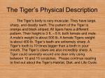 the tiger s physical description