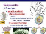 nucleic acids2