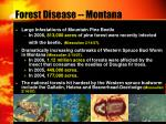 forest disease montana
