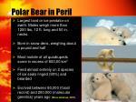 polar bear in peril