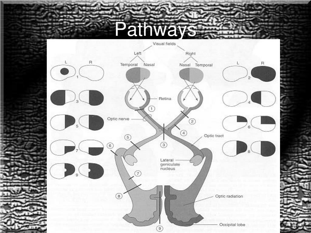 PPT - Vision and Pathways PowerPoint Presentation - ID:3927377