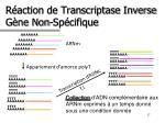 r action de transcriptase inverse g ne non sp cifique