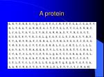 a protein