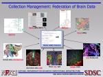 collection management federation of brain data