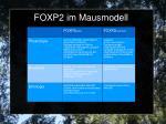 foxp2 im mausmodell1