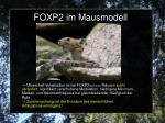 foxp2 im mausmodell4