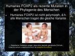 humanes foxp2 als rezente mutation in der phylogenie des menschen1