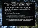 humanes foxp2 als rezente mutation in der phylogenie des menschen4