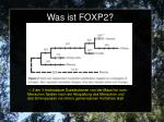 was ist foxp22