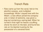 trench rats1