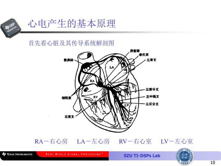 心电产生的基本原理