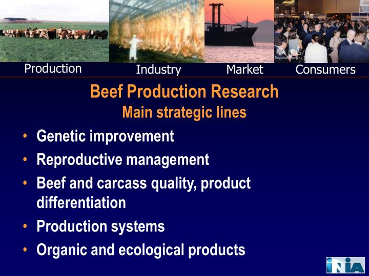 beef production research main strategic lines n.