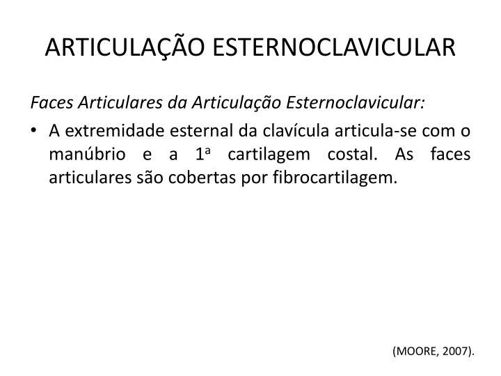 ARTICULAÇÃO ESTERNOCLAVICULAR