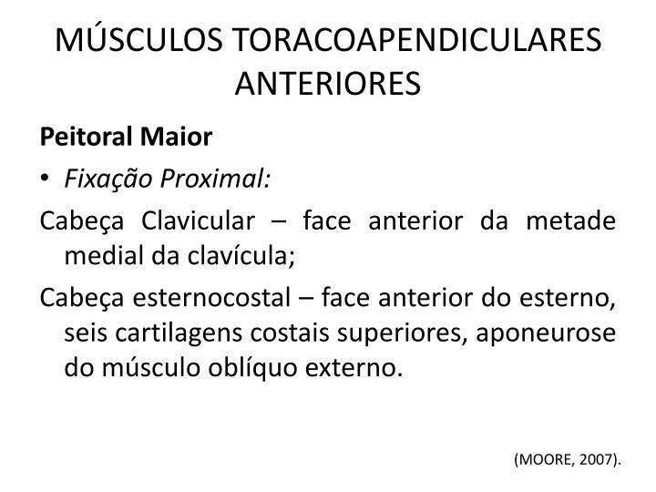M sculos toracoapendiculares anteriores