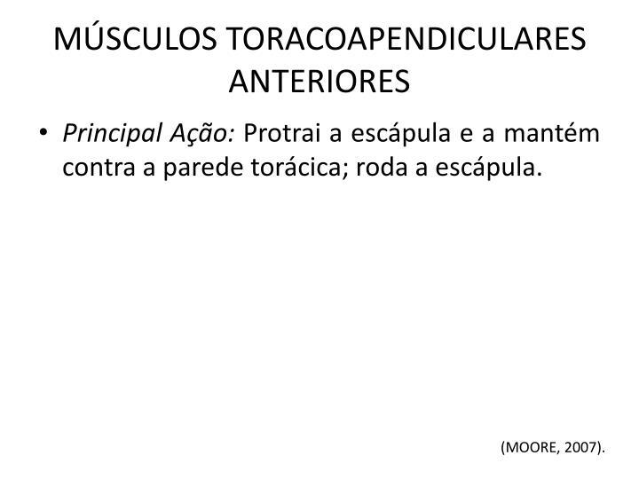 MÚSCULOS TORACOAPENDICULARES ANTERIORES
