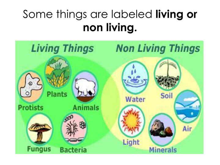 Some things are labeled