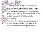 changes in antp expression transform antennae into legs