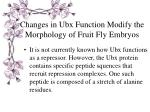 changes in ubx function modify the morphology of fruit fly embryos