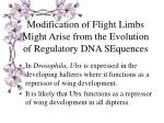 modification of flight limbs might arise from the evolution of regulatory dna sequences