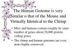 the human genome is very similar o that of the mouse and virtually identical to the chimp