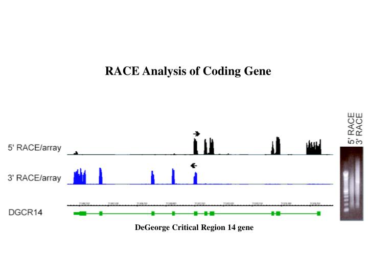 RACE Analysis of Coding Gene