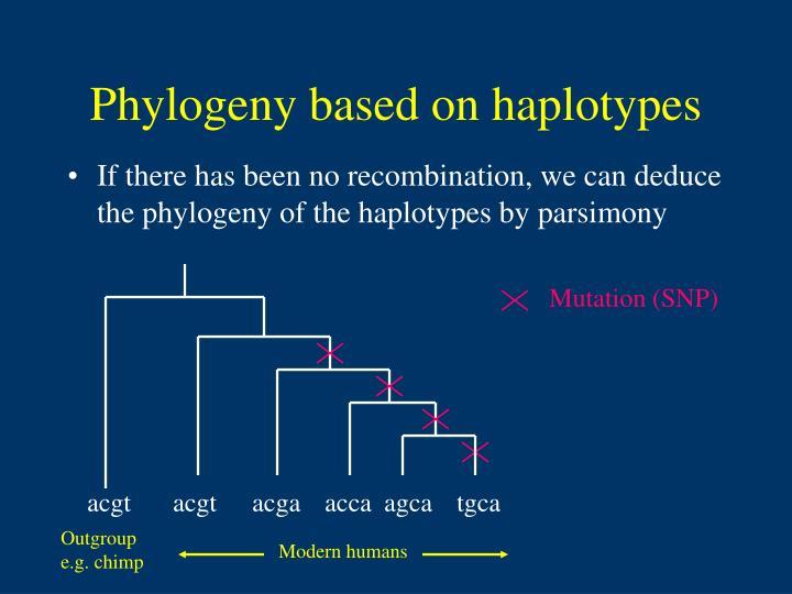 Phylogeny based on haplotypes