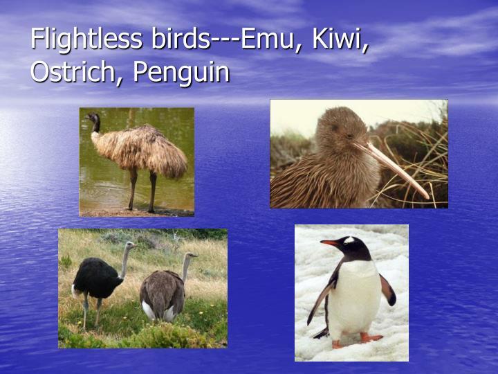 Flightless birds---Emu, Kiwi, Ostrich, Penguin