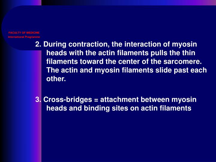 2. During contraction, the interaction of myosin heads with the actin filaments pulls the thin filaments toward the center of the sarcomere. The actin and myosin filaments slide past each other.
