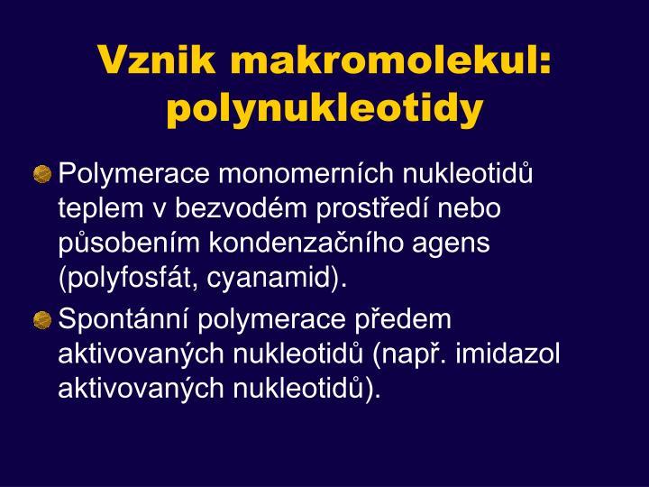 Vznik makromolekul: polynukleotidy