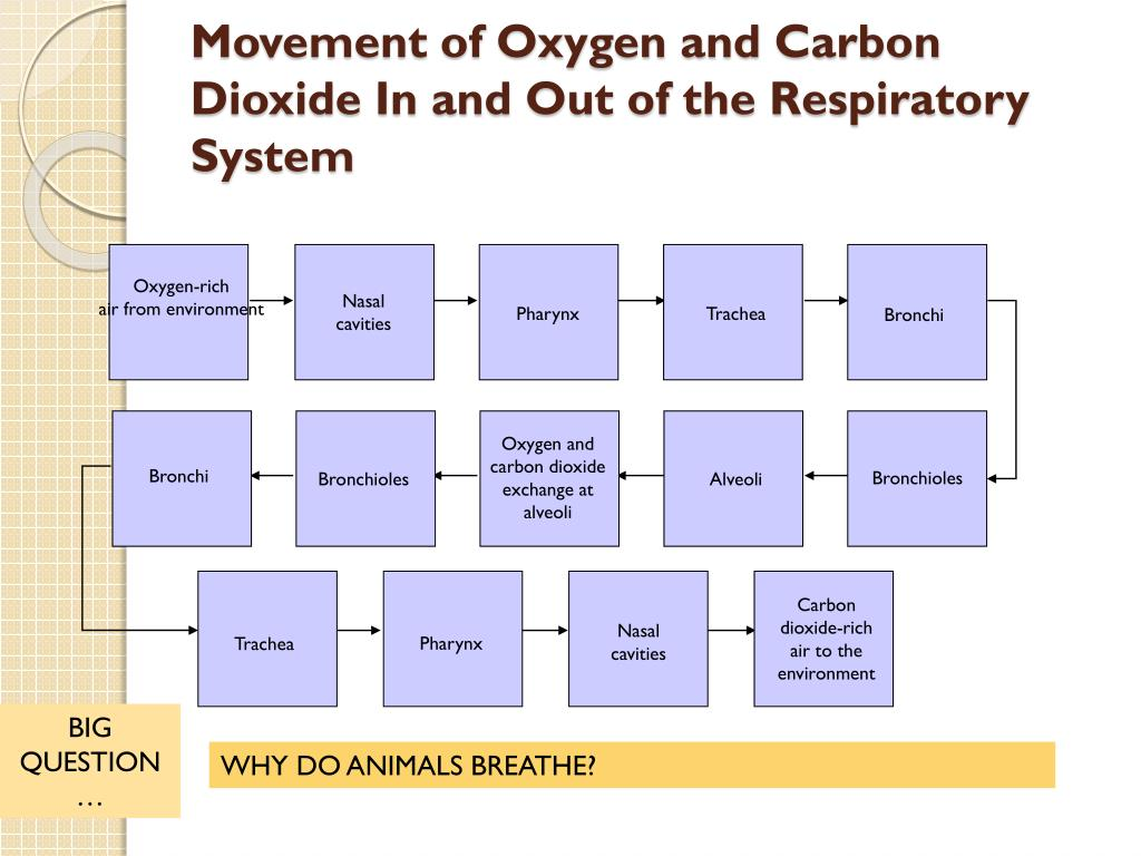 PPT - Comparative Anatomy: Animal Body Systems ...