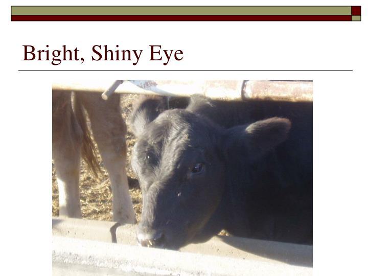 Bright, Shiny Eye