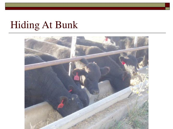 Hiding At Bunk