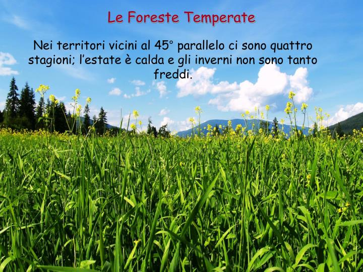 Le Foreste Temperate