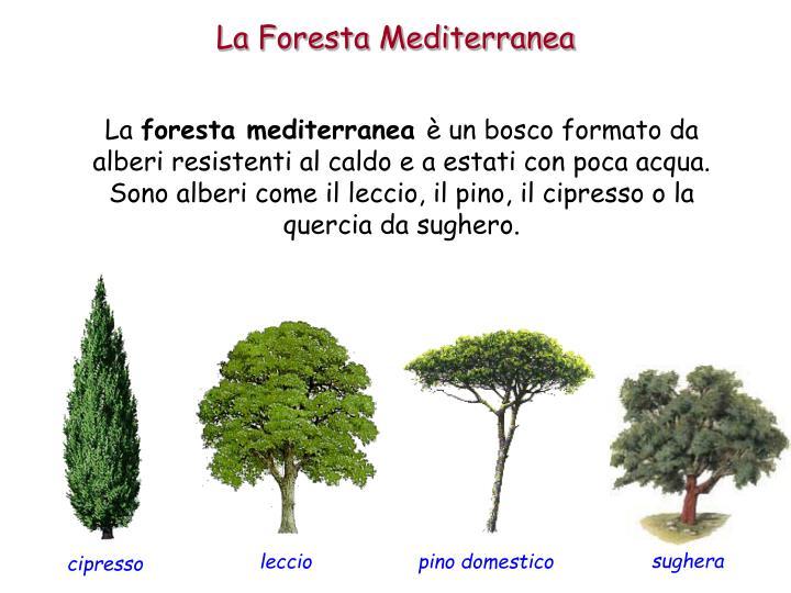 La Foresta Mediterranea