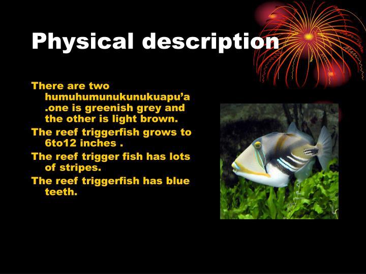 ppt humuhumunukunukuapua a powerpoint presentation id 3938232
