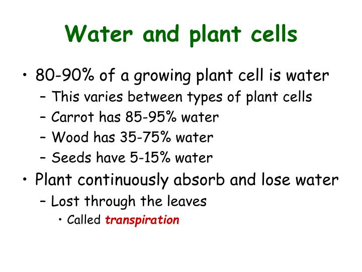 Water and plant cells