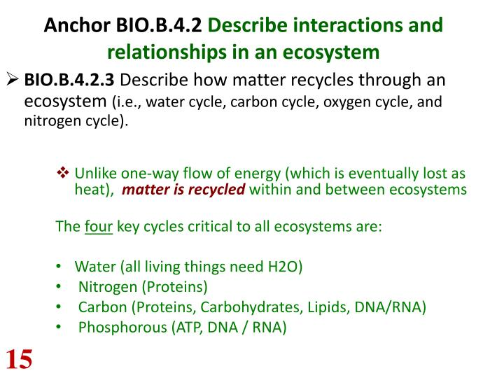 Anchor bio b 4 2 describe interactions and relationships in an ecosystem