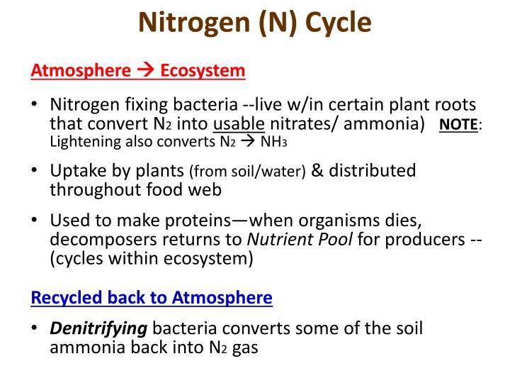Nitrogen (N) Cycle