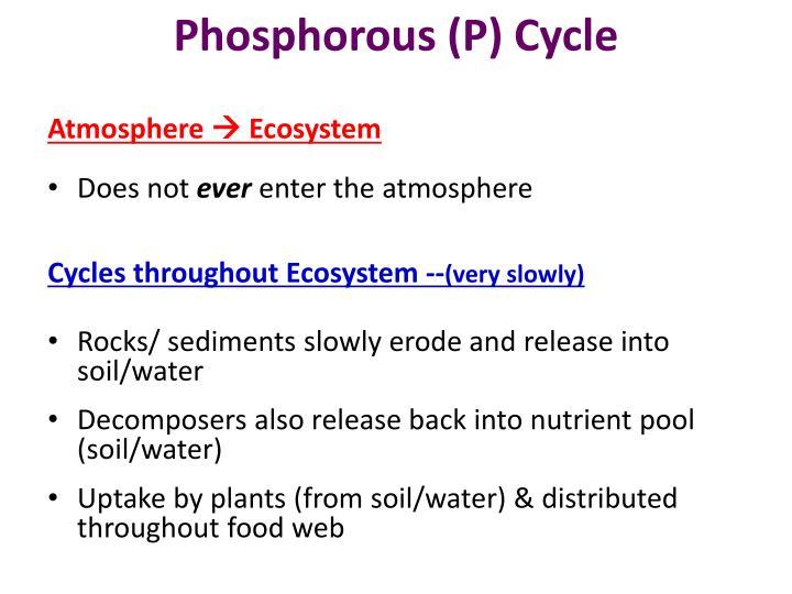 Phosphorous (P) Cycle